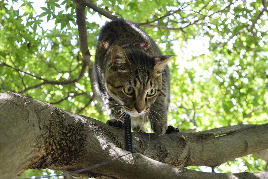 爪切りをされて慎重に木登りをする虎ノ介