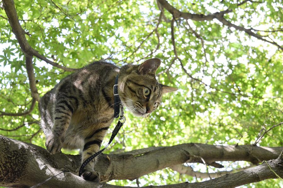 木の上からカラスの水浴びを覗く虎ノ介