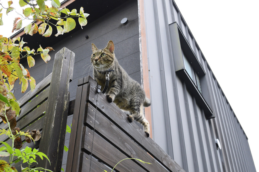 フェンスに登って鳥を捕まえようとする虎ノ介