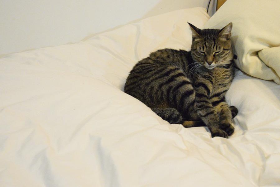 ベッドで眠る虎ノ介