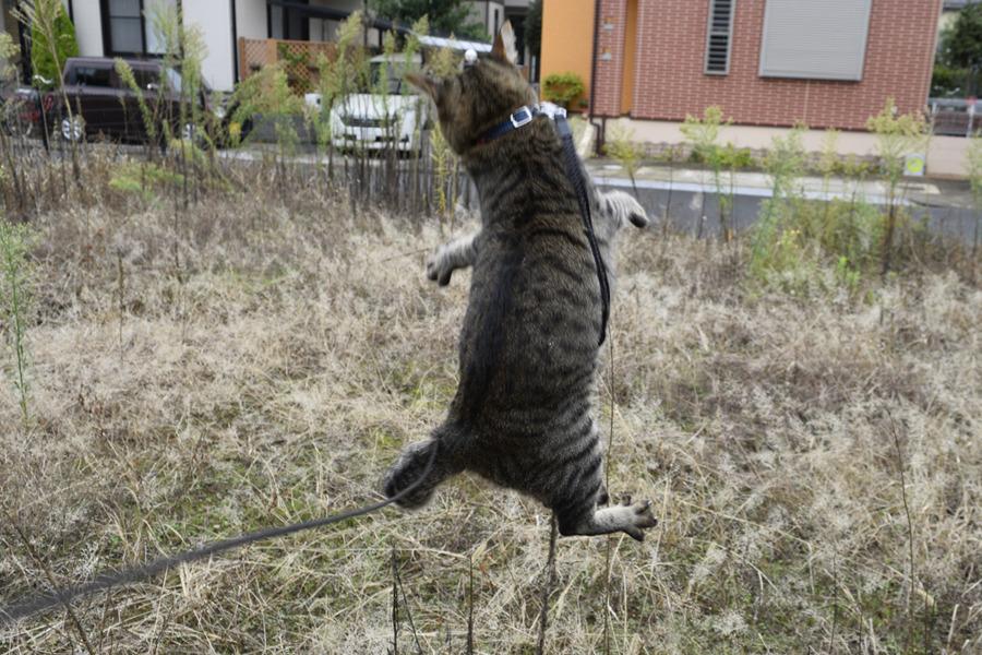 狩りをして飛び跳ねる虎ノ介