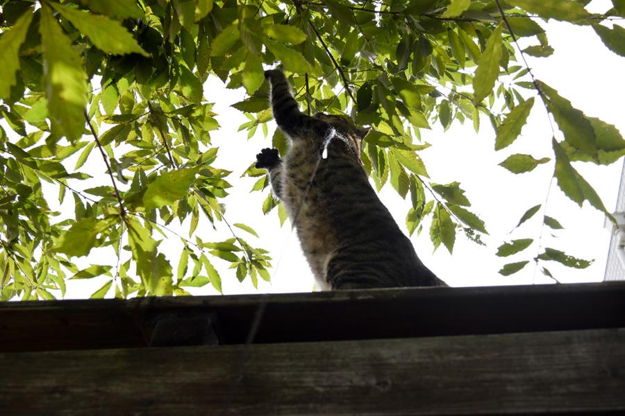 お家の木に登ろうとする虎ノ介