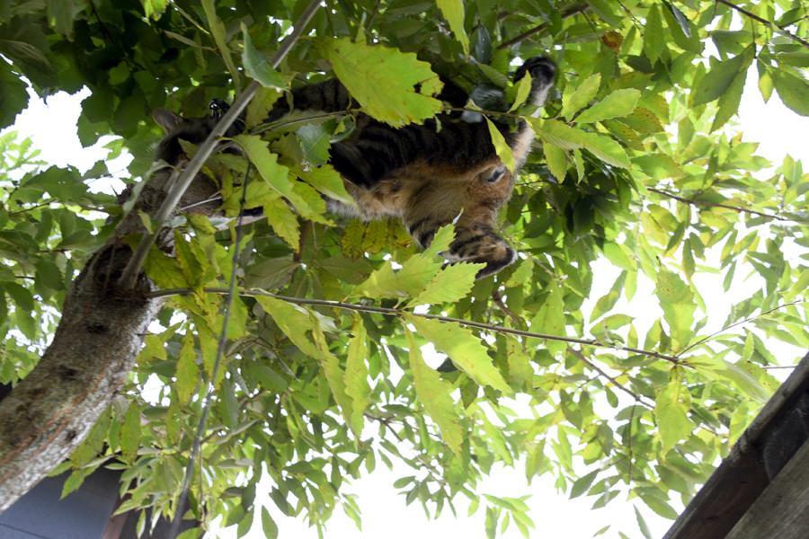 お家の木に飛び乗った虎ノ介