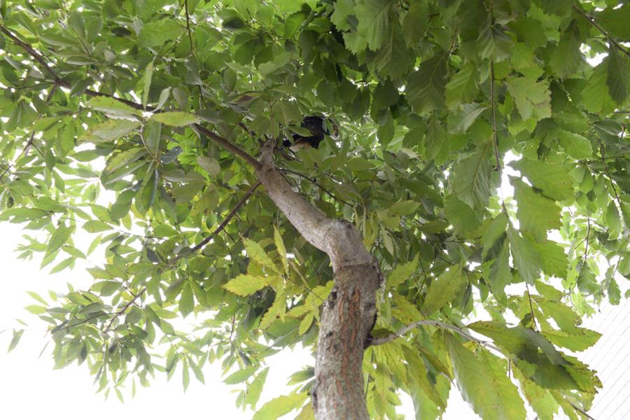 お家の木のてっぺんまで登った虎ノ介