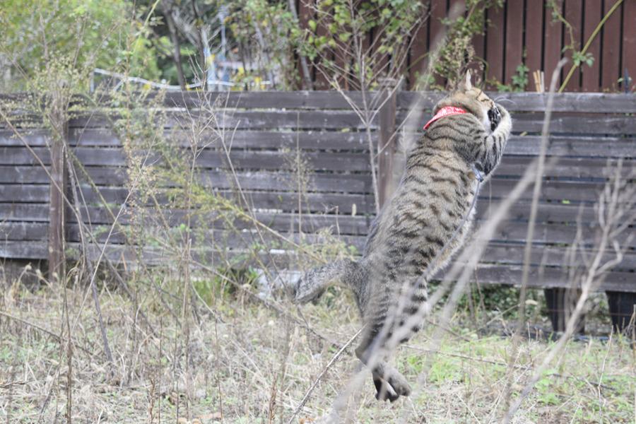 トンボを狩る虎ノ介