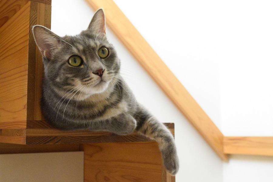 階段ですまし顔をする春太