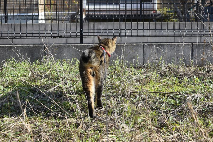 犬に見つからないようにこっそり近づく虎ノ介