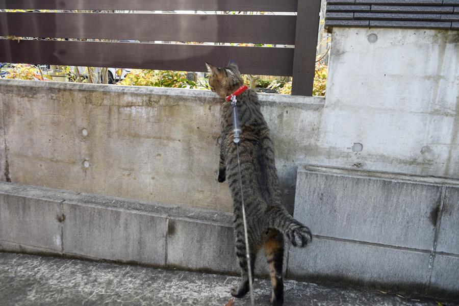 人と犬の往来をチェックする虎ノ介