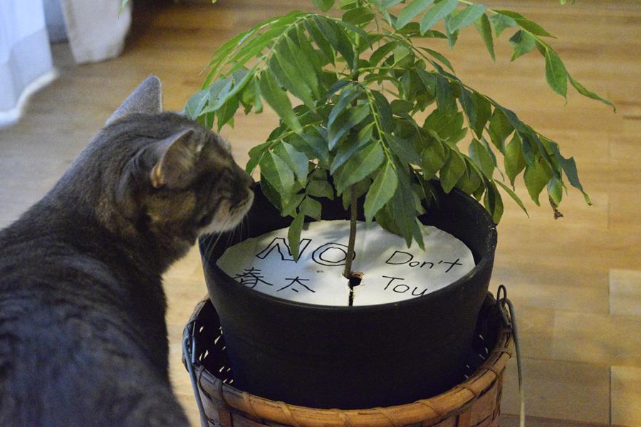 春太がイタズラしないように細工された植木鉢