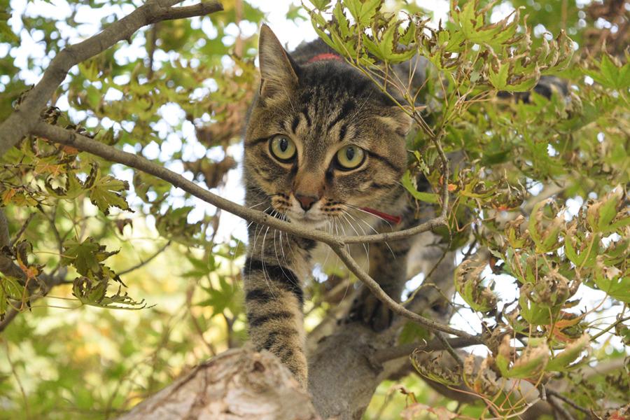 鳥をおいかけて木登りをする虎ノ介
