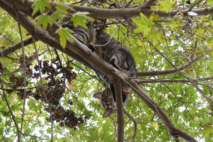 木の上から鳥を見下ろす虎ノ介