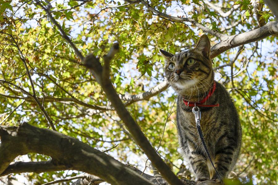 人間に木の枝に乗せてもらった虎ノ介