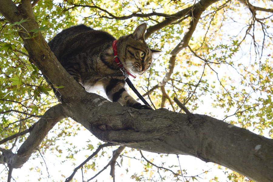 木の上から降りる虎ノ介