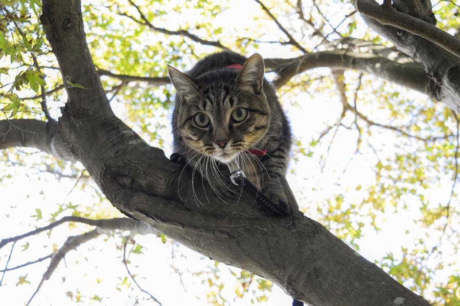 人間に飛び乗って木から地面に降りようとする虎ノ介