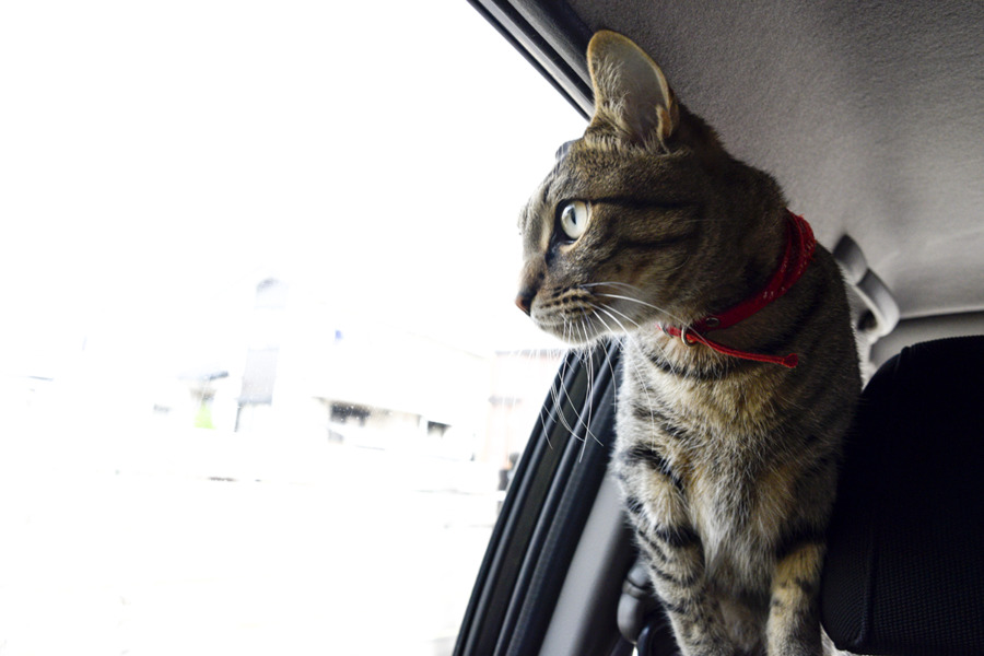 車の中から外の景色を眺める虎ノ介