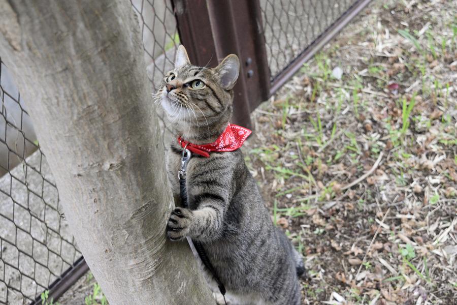 木の上を見上げる虎ノ介