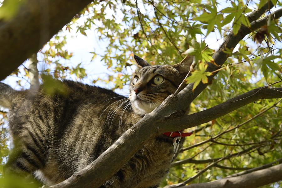 木登りして鳥を見上げる虎ノ介