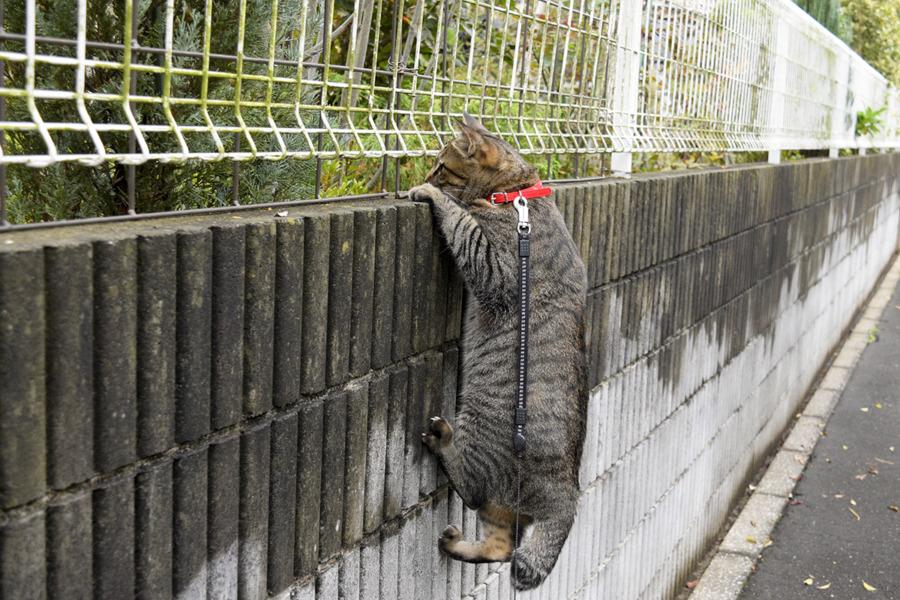 ぶら下がってフェンスの向こうの鳥を見つめる虎ノ介