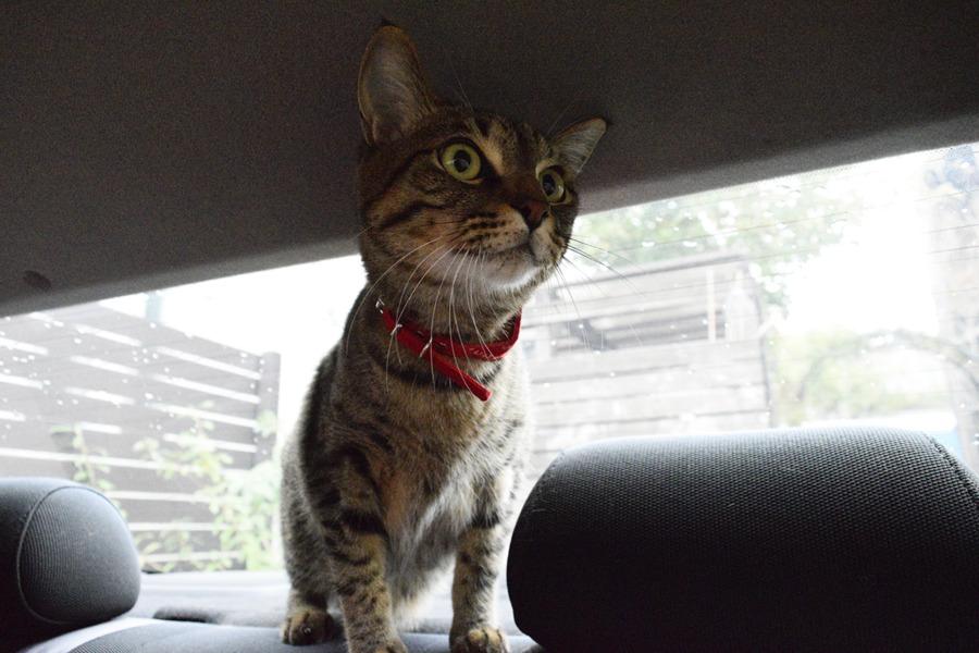 車の中からカラスを観察する虎ノ介