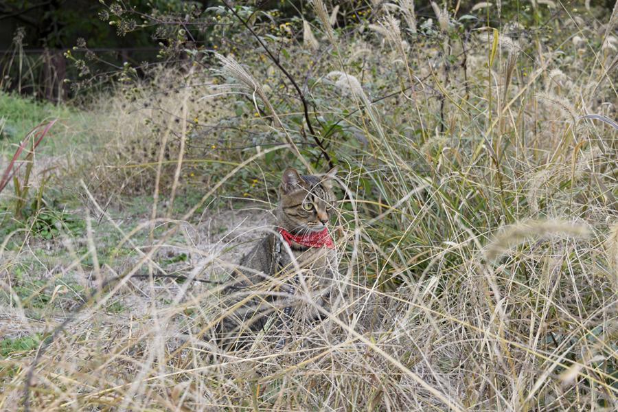 少し遠くの空き地にやってきた虎ノ介