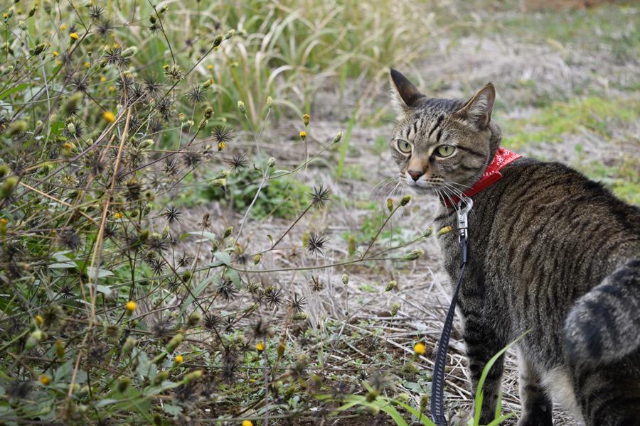 ご機嫌で散歩する虎ノ介
