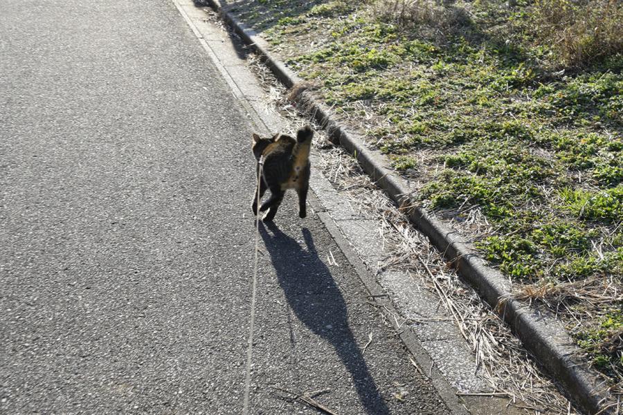 犬と鉢合わせて逃げる虎ノ介