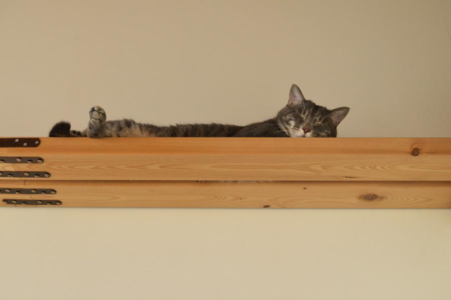 キャットウォークの上で眠る春太