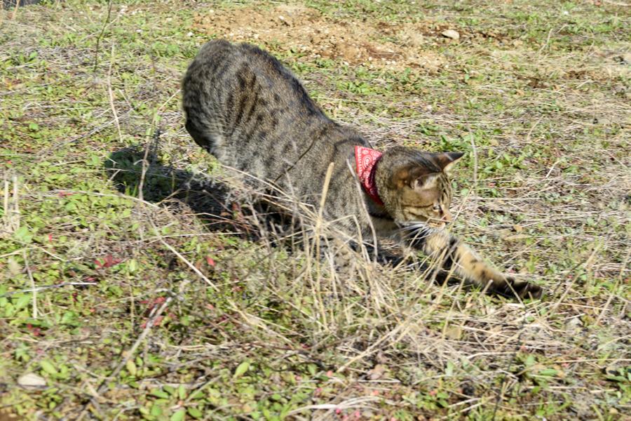 空き地で狩りをする虎ノ介