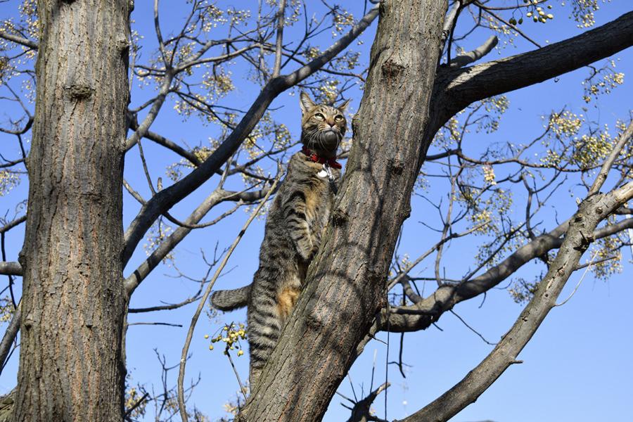 木の上に立ち上がって遠くをみつめる虎ノ介