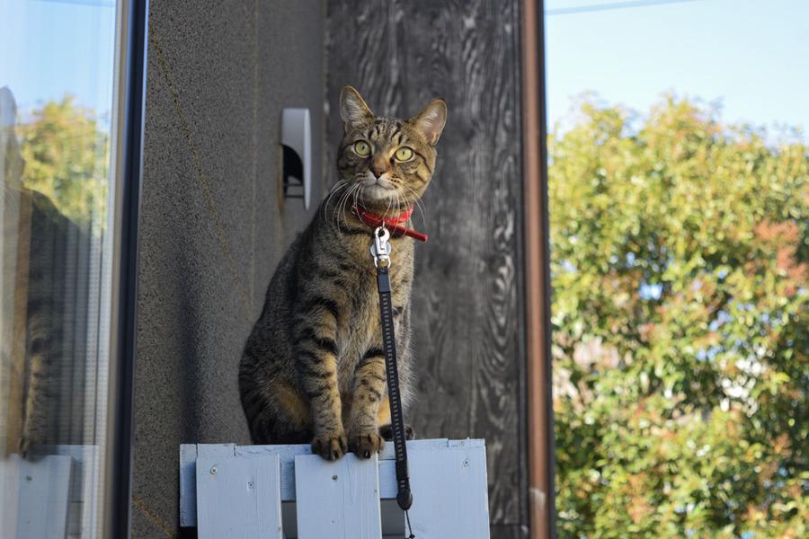 棚の上から鳥を見る虎ノ介