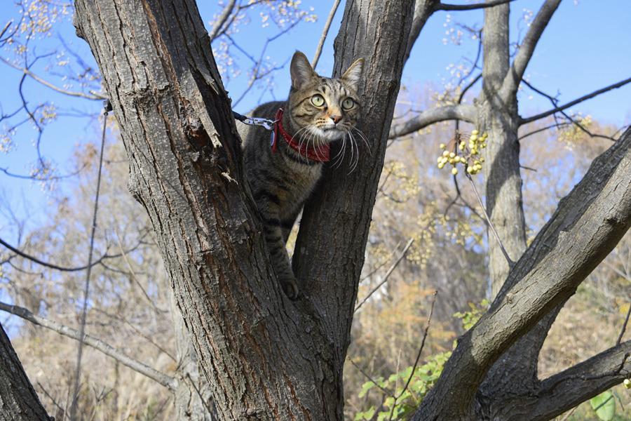 鳥をおいかけて木に登る虎ノ介
