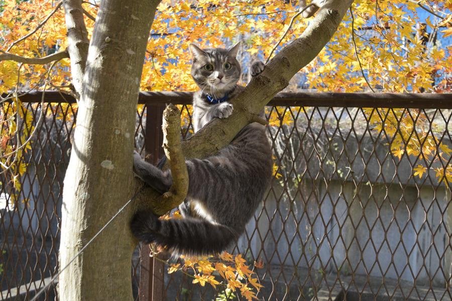 木から落ちそうになって枝につかまる春太