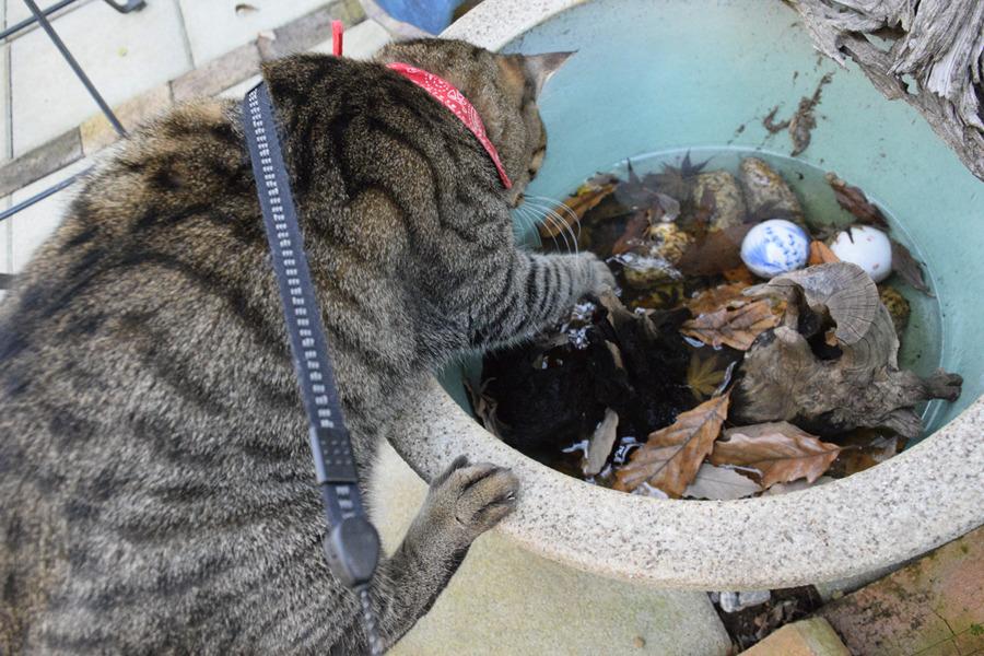 水鉢の水が少なくて落ちそうになった虎ノ介