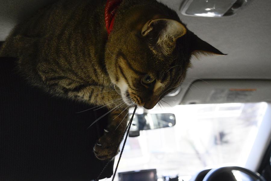 車の中で遊ぶ虎ノ介