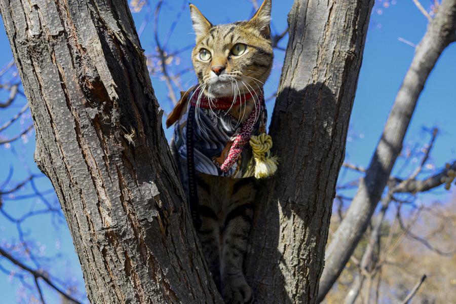 着物ケープを着て木登りをする虎ノ介
