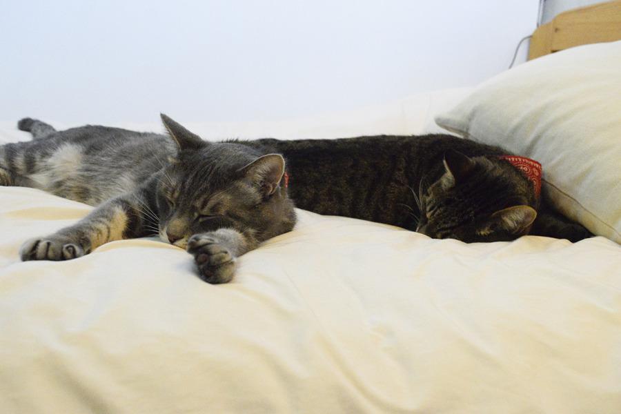 ベッドで並んで眠る虎ノ介と春太
