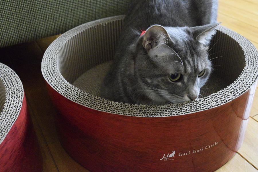 猫ベッドにはいる春太