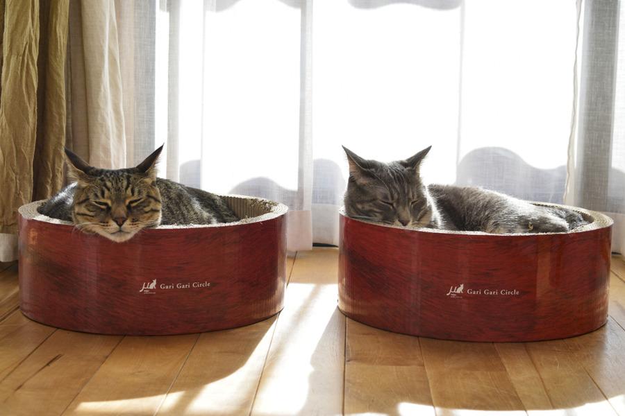 猫ベッドで並んで眠る虎ノ介と春太