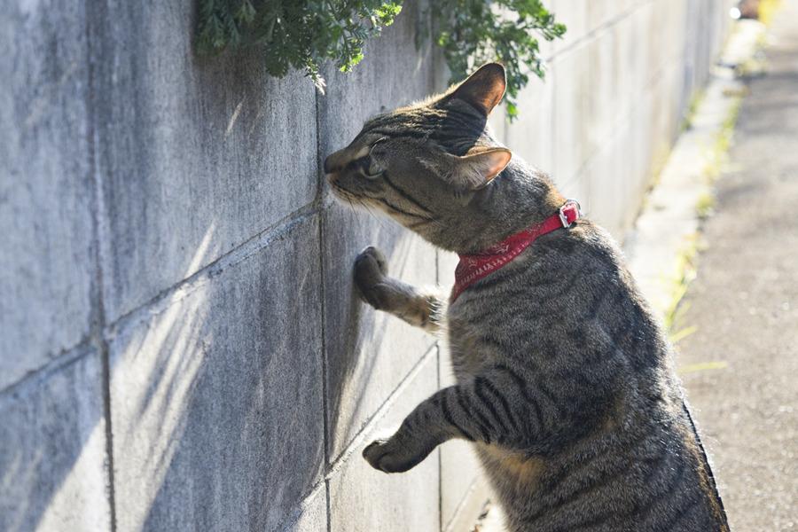 壁の匂いを嗅ぐ虎ノ介