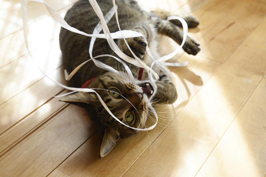 紐に夢中の虎ノ介