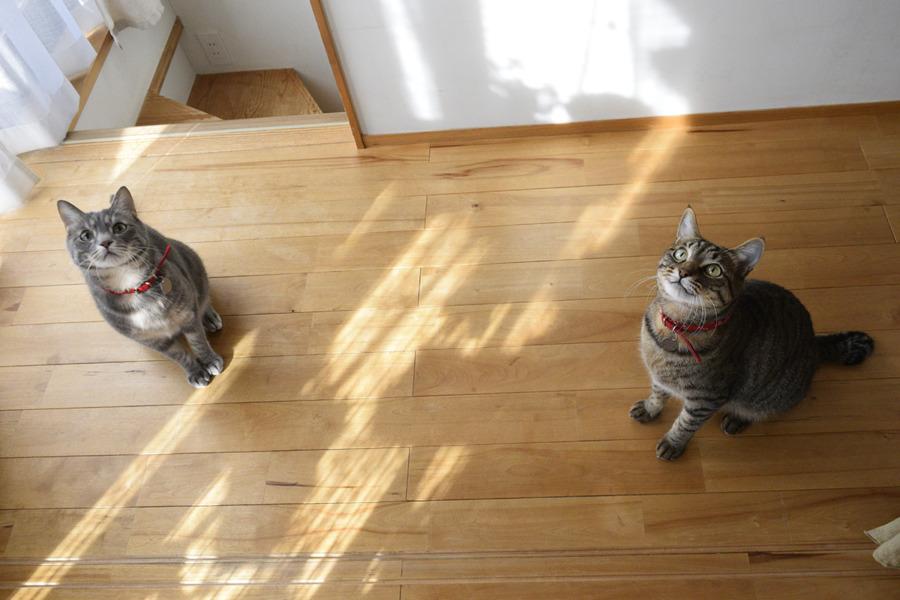 猫じゃらしを見つめる虎ノ介と春太