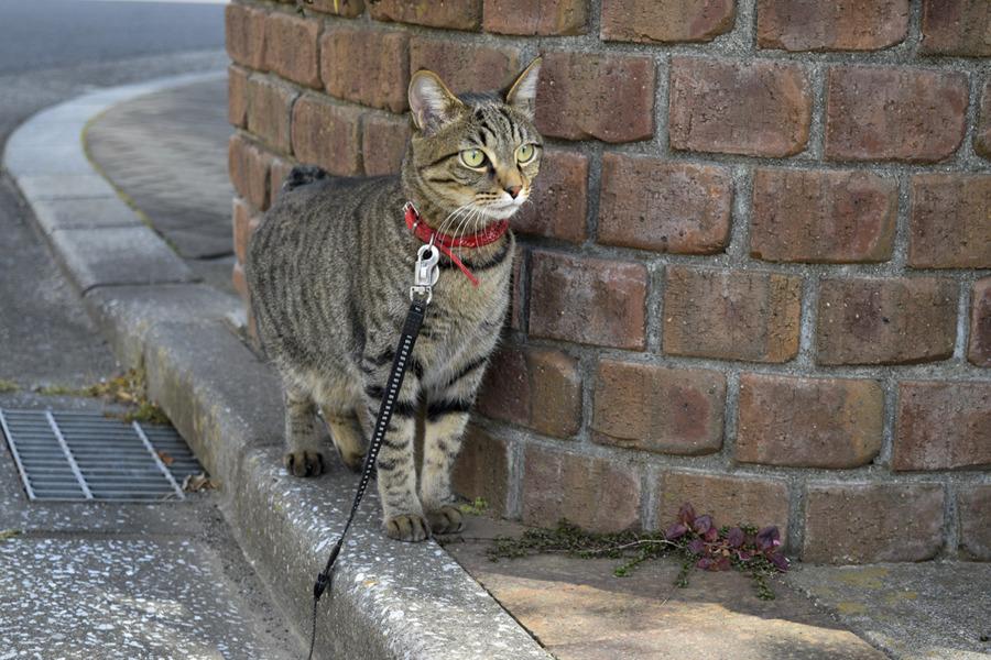 ご近所を散歩する虎ノ介
