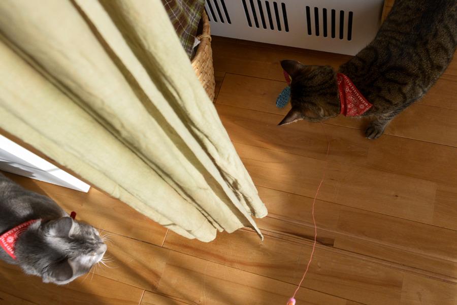 猫じゃらしで遊ぶ虎ノ介を覗く春太