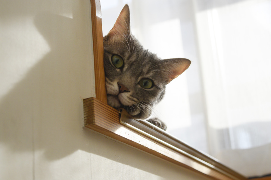 階段から顔をのぞかせる春太