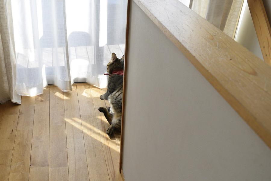 遊んでいて階段から落ちる虎ノ介
