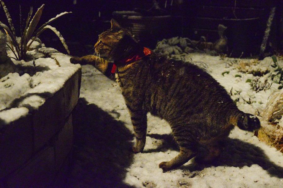 雪の中脱走した虎ノ介