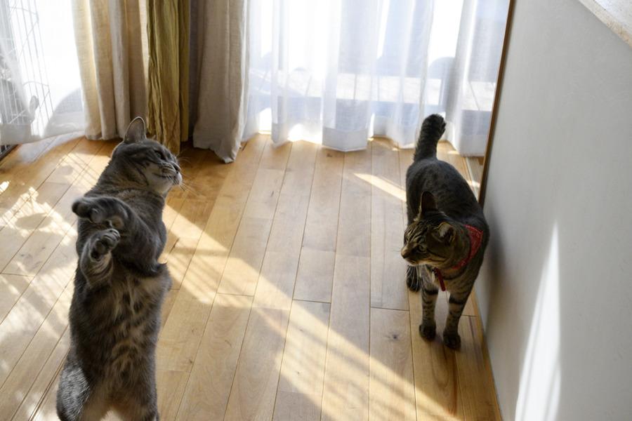 猫じゃらしで遊ぶ春太とそれを見る虎ノ介