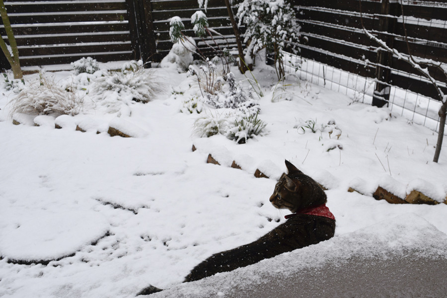 雪の中散歩にでかけようとする虎ノ介