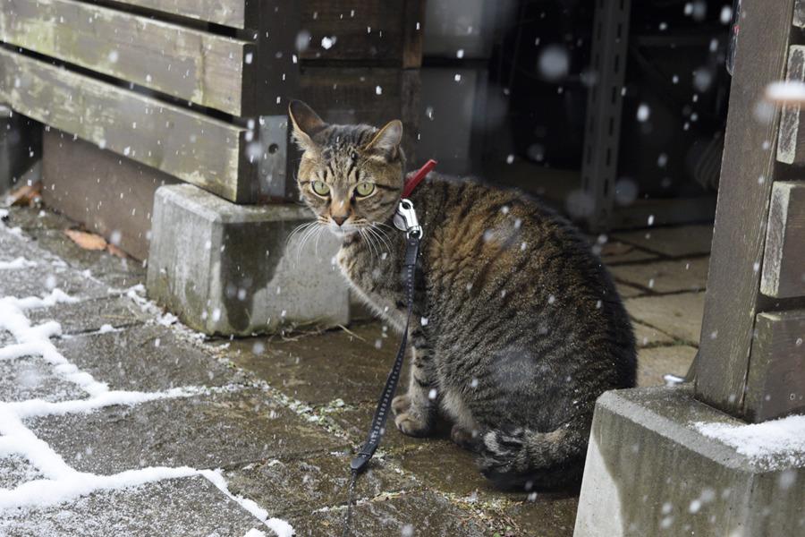 雪がないところを選んで進む虎ノ介