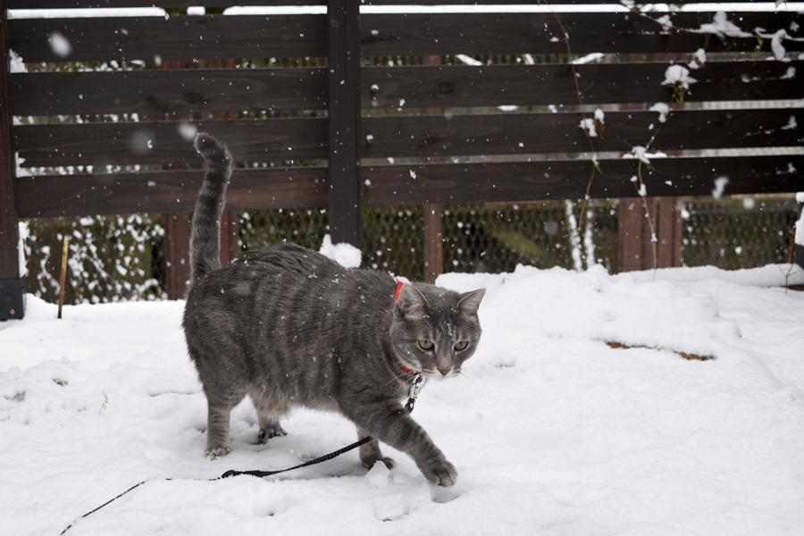 雪の中を歩く春太